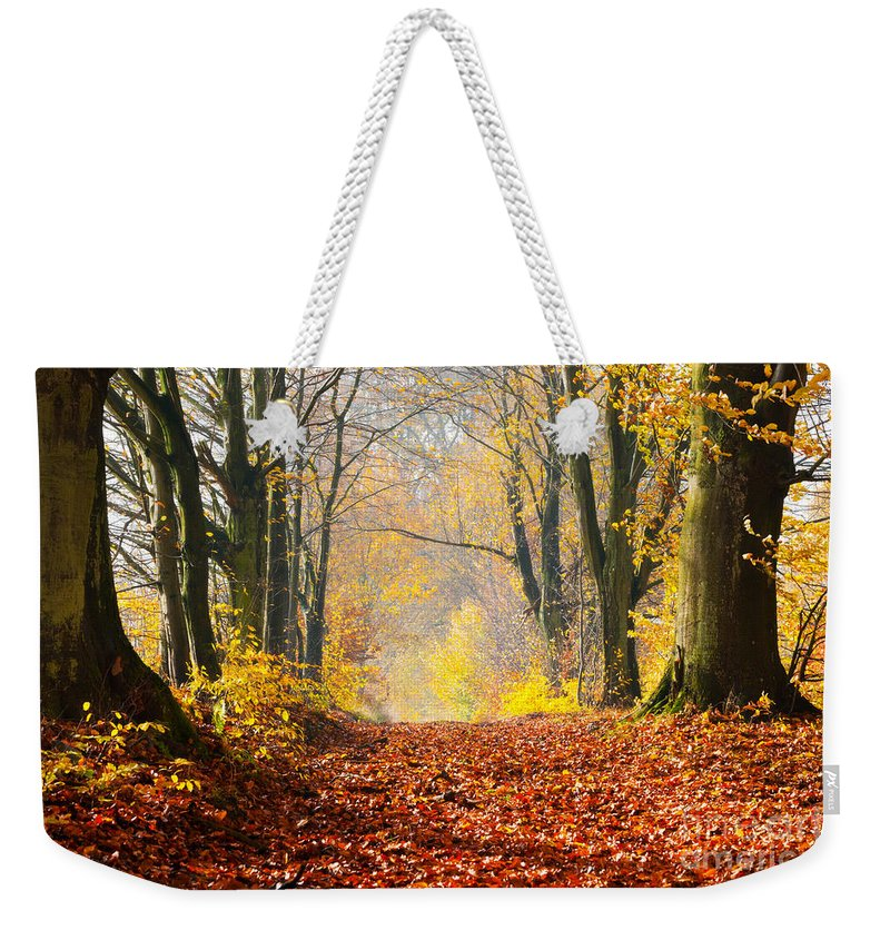 Autumn Weekender Tote Bag featuring the photograph Path Of Red Leaves Towards Light by Michal Bednarek