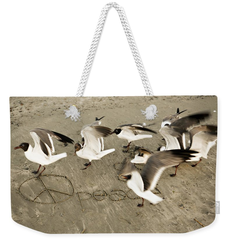 Bird Weekender Tote Bag featuring the photograph Peace Dance by Marilyn Hunt