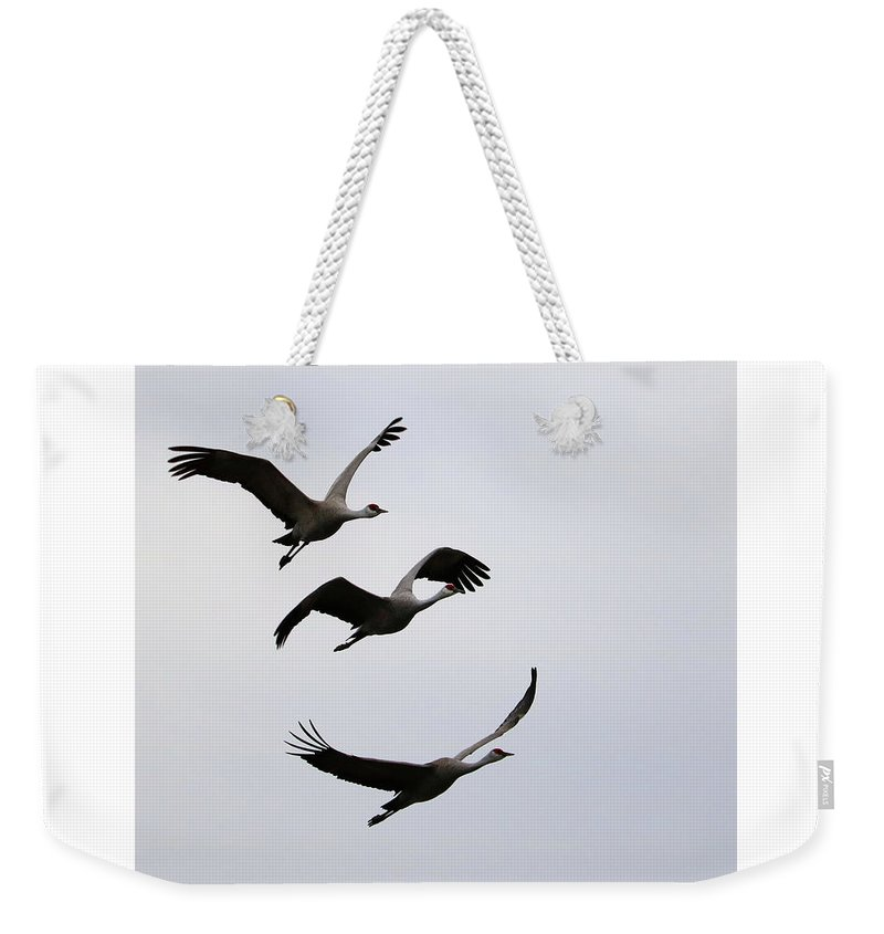 Sandhill Cranes Weekender Tote Bag featuring the photograph Peaceful Sandhill Cranes Flying by Carol Groenen