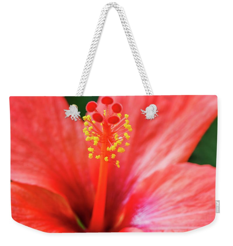 Hibiscus Weekender Tote Bag featuring the photograph Peach Colored Hibiscus Closeup by Vishwanath Bhat