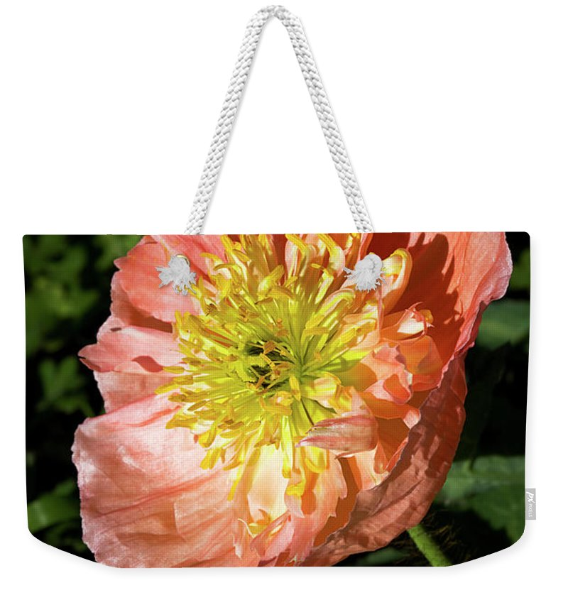 Poppy Weekender Tote Bag featuring the photograph Peach Colored Poppy by Phyllis Denton