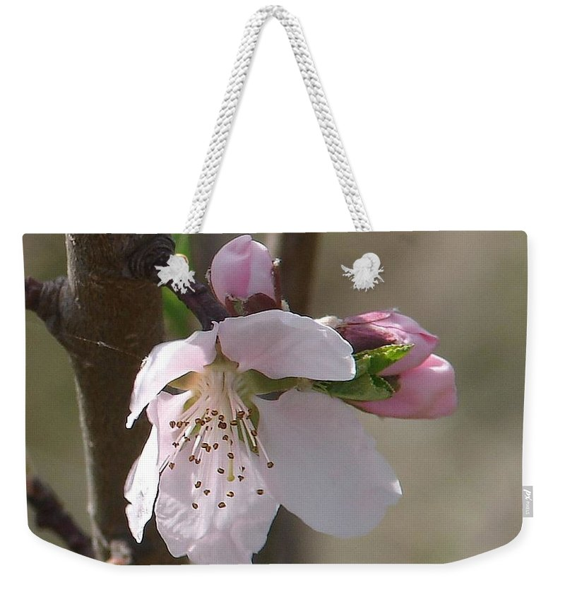 Pink Tree Branch Green Leaves Weekender Tote Bag featuring the photograph Peach Tree 3 by Luciana Seymour