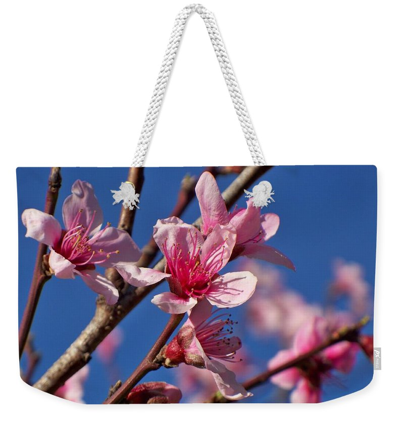 Peach Weekender Tote Bag featuring the photograph Peach Tree Blossoms by Betty Northcutt
