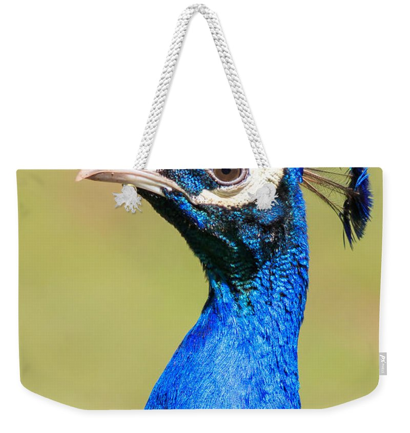 Peacock Weekender Tote Bag featuring the photograph Peacock - 2 by Chris Smith