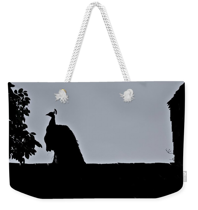 Peacock Weekender Tote Bag featuring the photograph Peacock at Night by Douglas Barnett