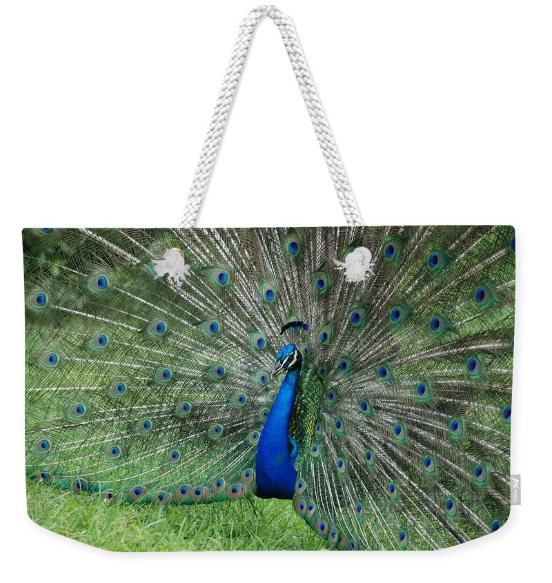 Peacock Weekender Tote Bag featuring the photograph Peacocks Glory by Rob Hans