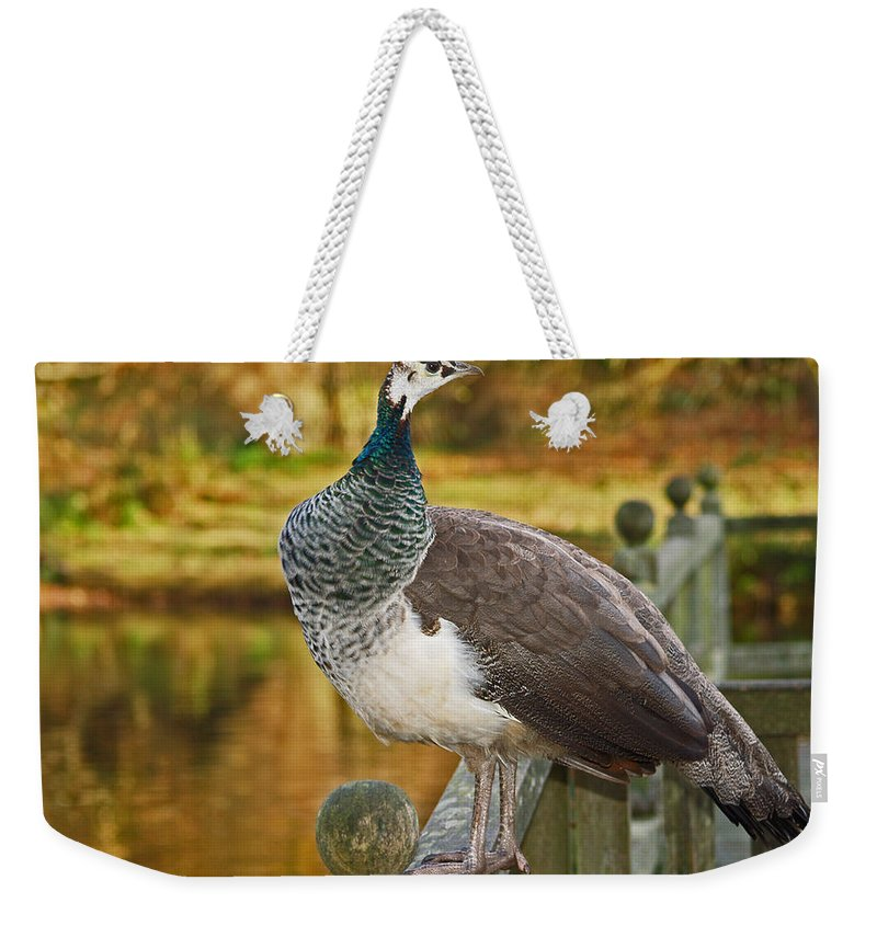 Peahen Weekender Tote Bag featuring the photograph Peahen In Autumn by Bel Menpes
