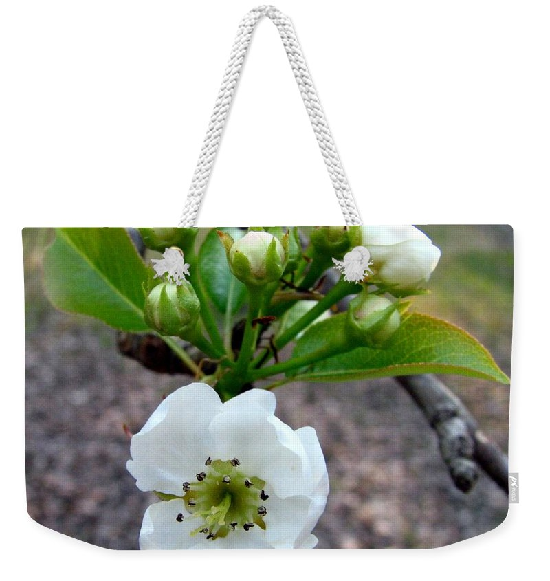 Pear Tree Blossum Weekender Tote Bag featuring the photograph Pear Tree Blossom 3 by J M Farris Photography