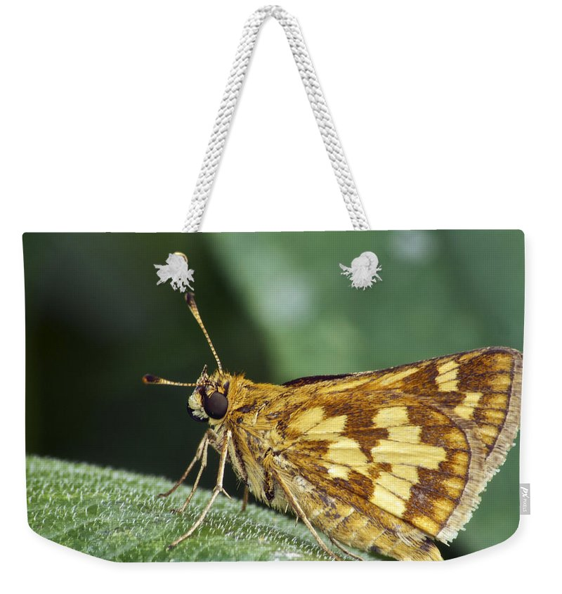 Peck's Skipper Weekender Tote Bag featuring the photograph Peck's Skipper by Michael Peychich