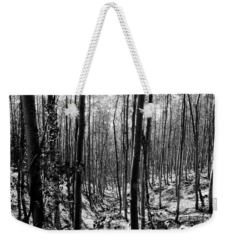 Pecos National Forest Weekender Tote Bag featuring the photograph Pecos Wilderness by David Lee Thompson
