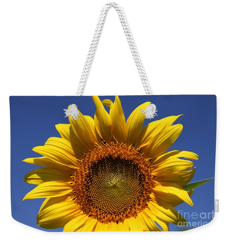 Sunflowers Weekender Tote Bag featuring the photograph Peek A Boo by Amanda Barcon
