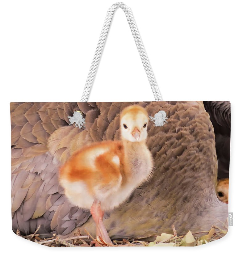 Chicks Weekender Tote Bag featuring the photograph Peek-a-boo I See You by Zina Stromberg