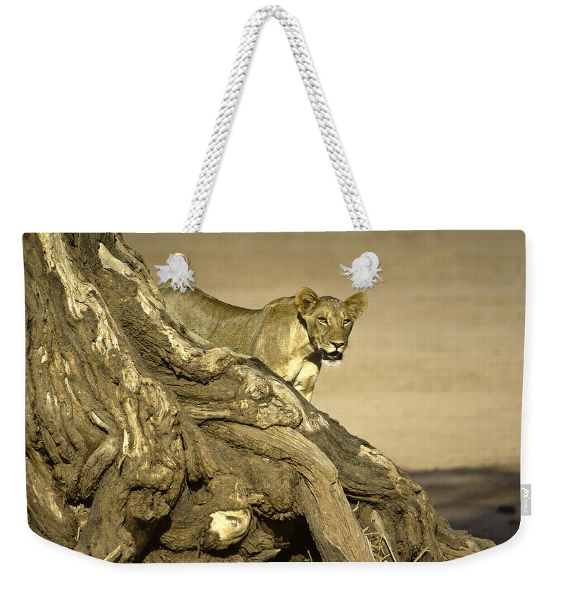 Africa Weekender Tote Bag featuring the photograph Peeking Out by Michele Burgess