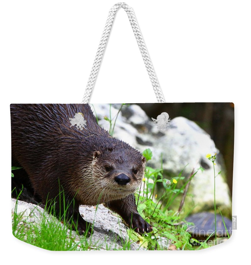 Otter Weekender Tote Bag featuring the photograph Peering Otter by Barbara Bowen
