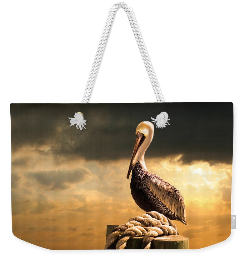 Pelican Weekender Tote Bag featuring the photograph Pelican After A Storm by Mal Bray