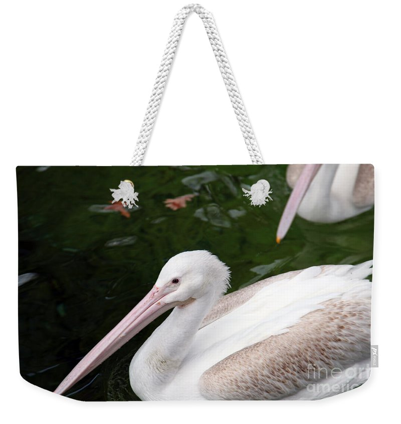 Pelican Weekender Tote Bag featuring the photograph Pelican by Amanda Barcon