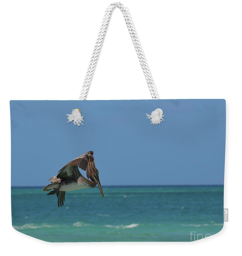 Pelican Weekender Tote Bag featuring the photograph Pelican Flapping His Wings In Flight Off Aruba by DejaVu Designs