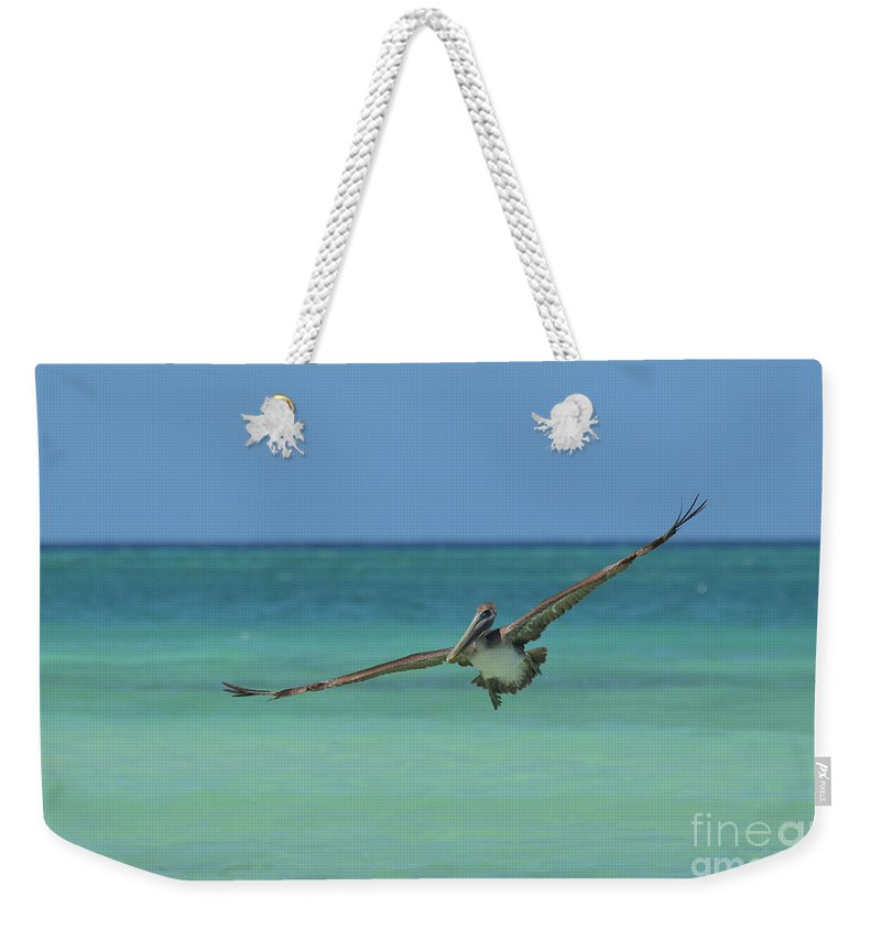Pelican Weekender Tote Bag featuring the photograph Pelican Flying In The Carribean Waters Off Aruba by DejaVu Designs