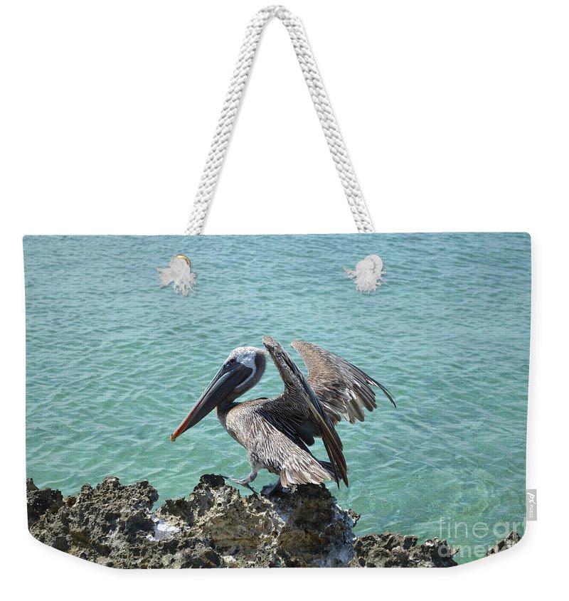 Pelican Weekender Tote Bag featuring the photograph Pelican In Aruba Landing On Lava Rock by DejaVu Designs