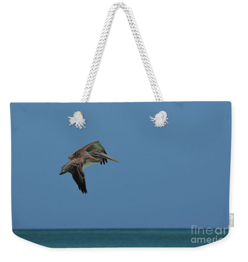 Pelican Weekender Tote Bag featuring the photograph Pelican In Flight Over Gorgeous Tropical Waters Of Aruba by DejaVu Designs