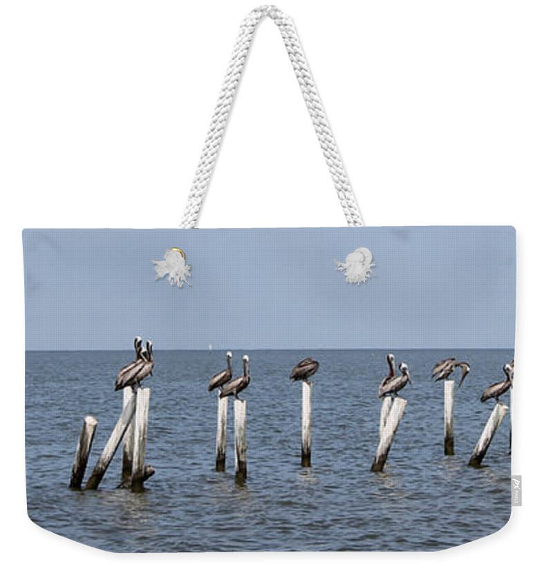 Pelican Weekender Tote Bag featuring the photograph Pelican Parliament by Laura Martin