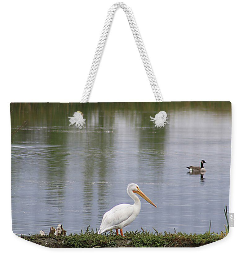 Bird Weekender Tote Bag featuring the photograph Pelican Reflection by Alyce Taylor