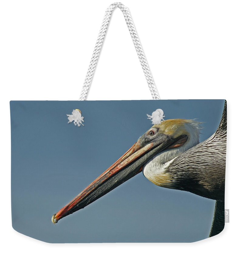 Animals Weekender Tote Bag featuring the photograph Pelican Upclose by Ernie Echols