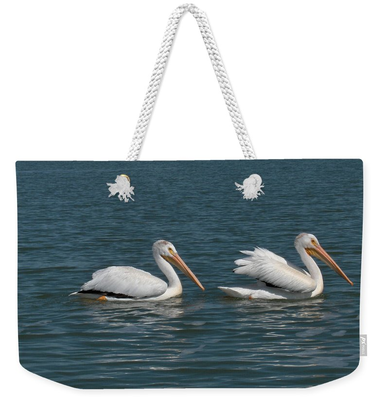 Wild Animals Birds Nature Lake Water Pelicans Weekender Tote Bag featuring the photograph Pelicans by Andrea Lawrence