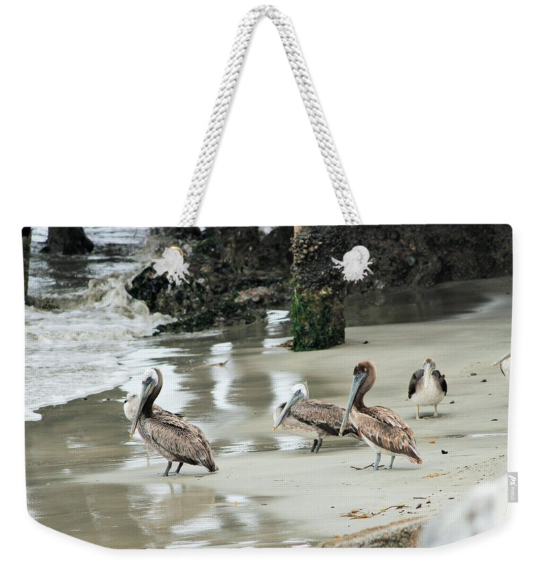 Pelican Weekender Tote Bag featuring the photograph The Whole Gang by Marnie Patchett