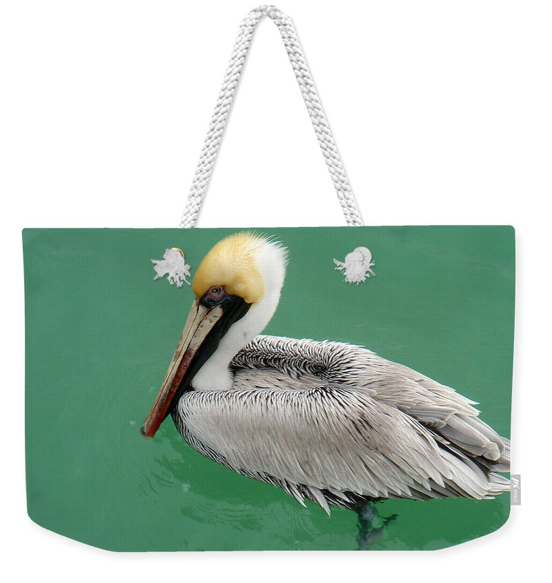 Florida Weekender Tote Bag featuring the photograph Pelican's Cove by Chris Andruskiewicz