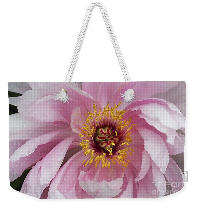 Flower Weekender Tote Bag featuring the photograph Peonie In Pink by Deborah Benoit