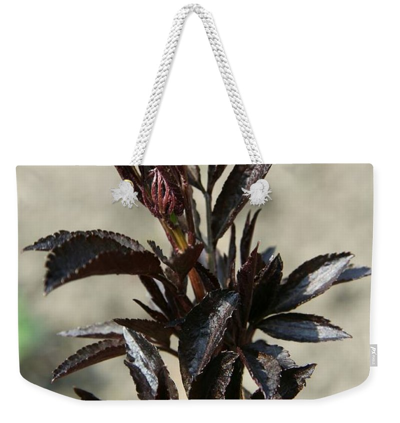 Peony Weekender Tote Bag featuring the photograph Peony Sprouts by Christiane Schulze Art And Photography