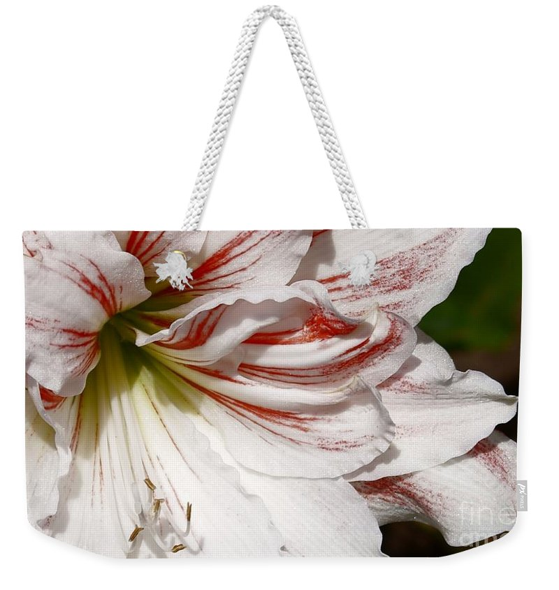 Peppermint Candy Lily Flower Weekender Tote Bag featuring the photograph Peppermint Candy by Joanne Smoley