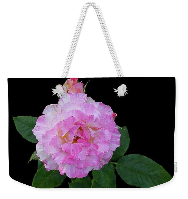 Cutout Weekender Tote Bag featuring the photograph Peppermint Rose1 Cutout by Shirley Heyn