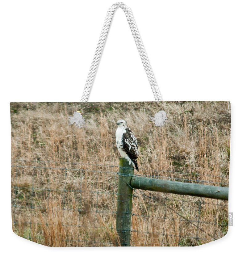 Hawk Weekender Tote Bag featuring the photograph Perched Hawk by Douglas Barnett