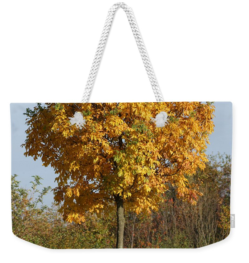 Autumn Weekender Tote Bag featuring the photograph Perfect Little Tree by Carol Lynch