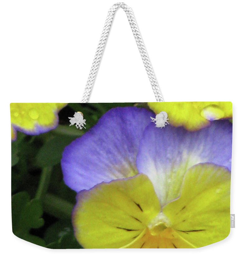 Pansy Weekender Tote Bag featuring the photograph Perfectly Pansy 12 by Pamela Critchlow