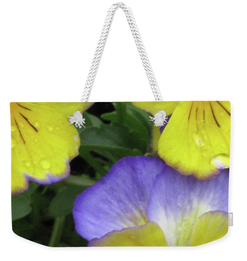 Pansy Weekender Tote Bag featuring the photograph Perfectly Pansy 13 by Pamela Critchlow