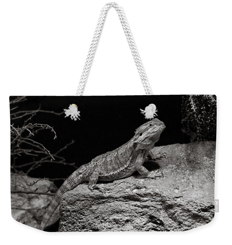 Lizard Weekender Tote Bag featuring the photograph Perfectly Still by Marilyn Hunt