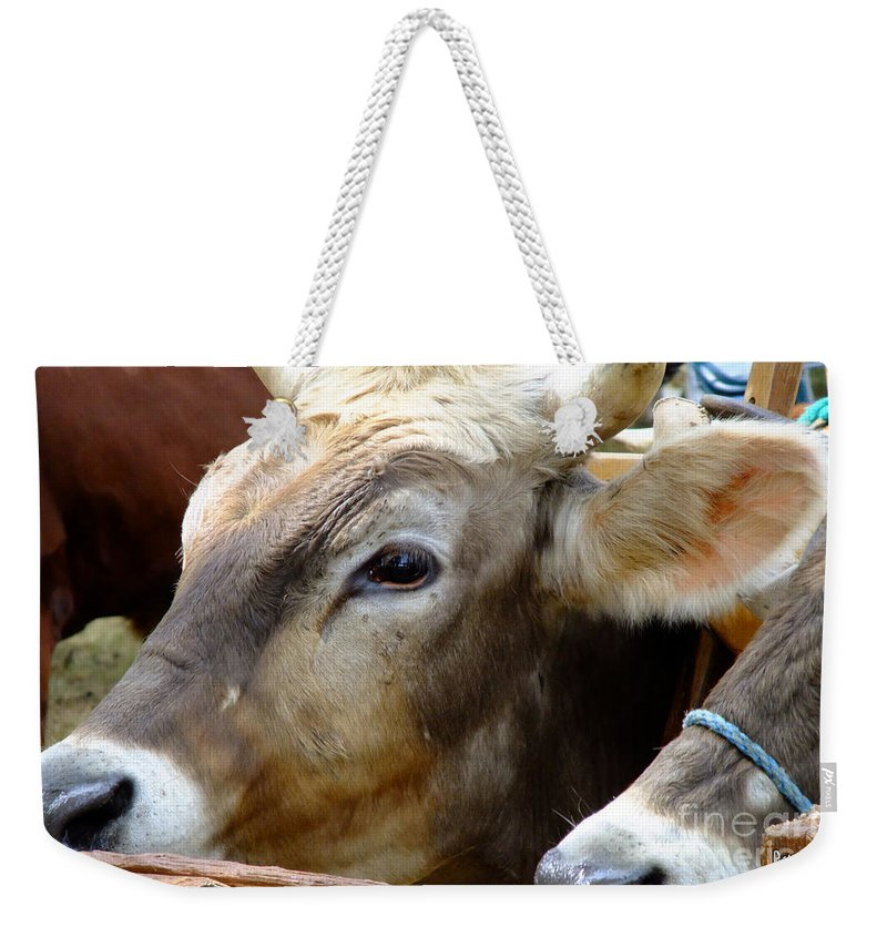 Animals Weekender Tote Bag featuring the photograph Performance Anxiety by RC DeWinter