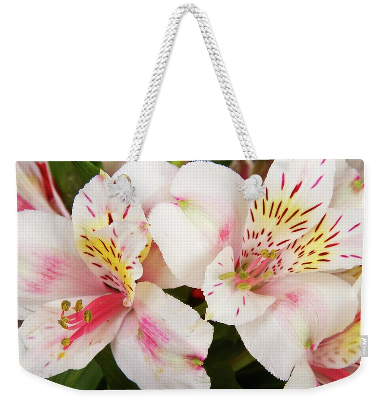 Peruvian Lilies Weekender Tote Bag featuring the photograph Peruvian Lilies Flowers White And Pink Color Print by James BO Insogna