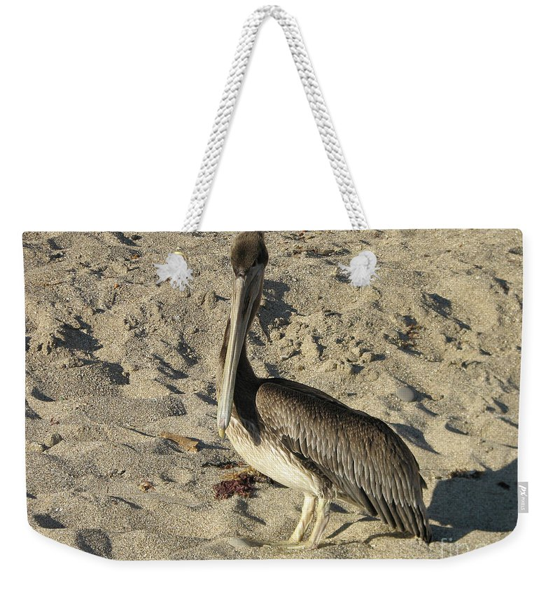 Pelican Weekender Tote Bag featuring the photograph Peruvian Pelican Standing On A Sandy Beach by DejaVu Designs