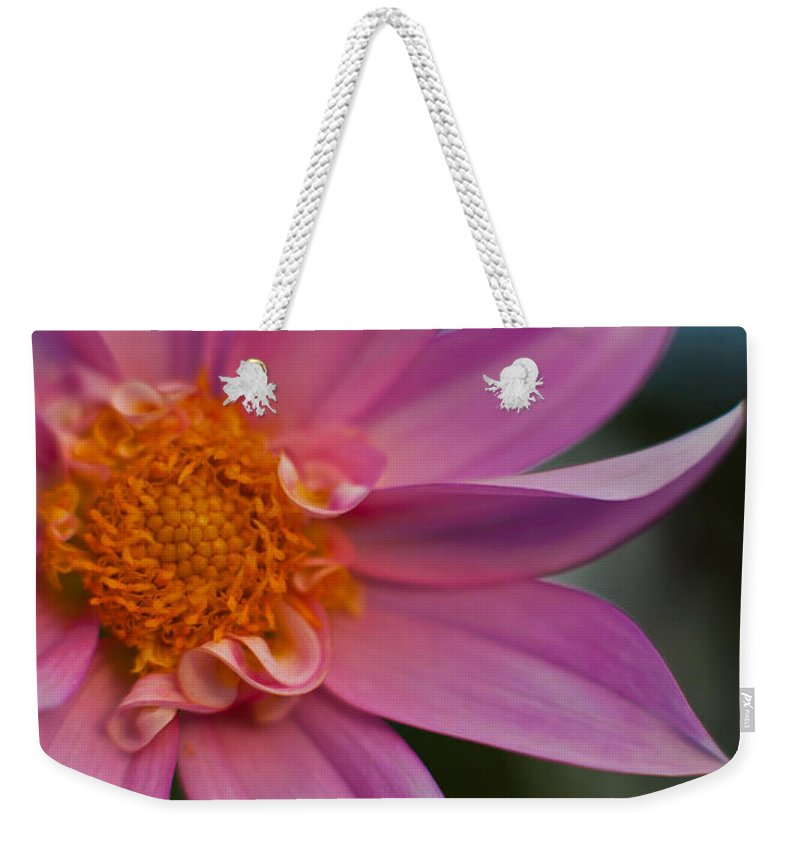 Dahlia Weekender Tote Bag featuring the photograph Petals by Mike Reid