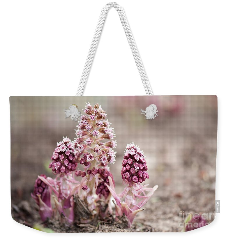 Petasites Hybridus Weekender Tote Bag featuring the photograph Petasites Hybridus Pink Flowers by Arletta Cwalina