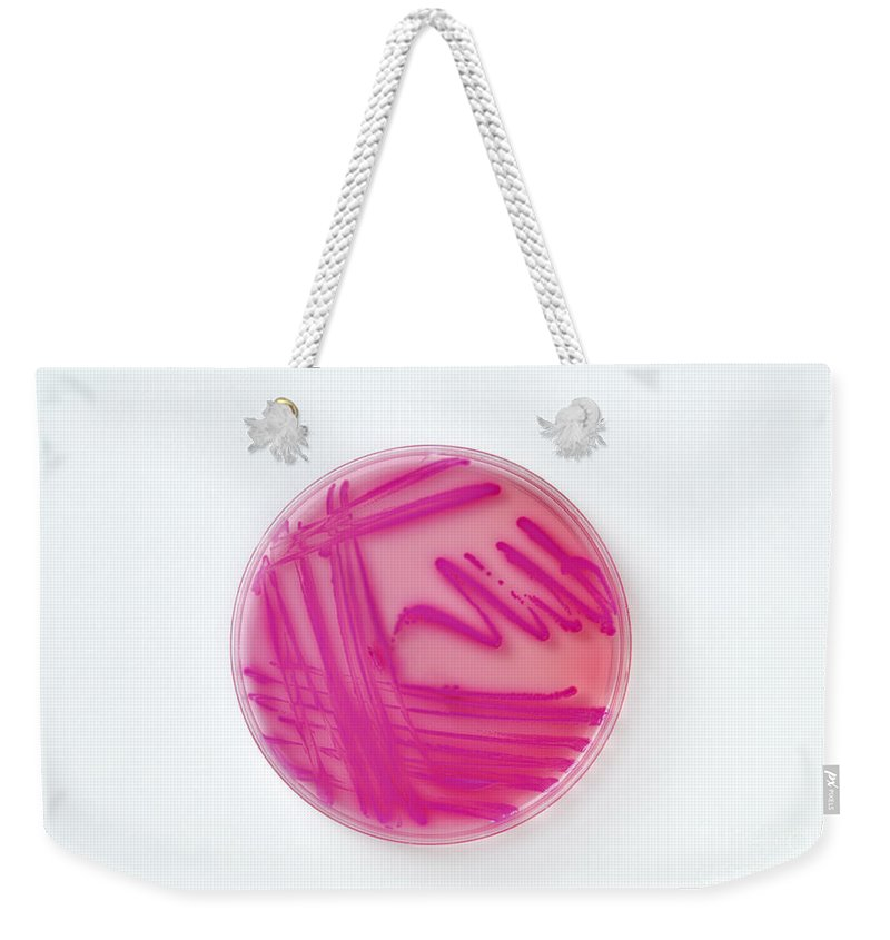 Infection Weekender Tote Bag featuring the photograph Petri Dish Of Acinetobacter Baumannii by George Mattei
