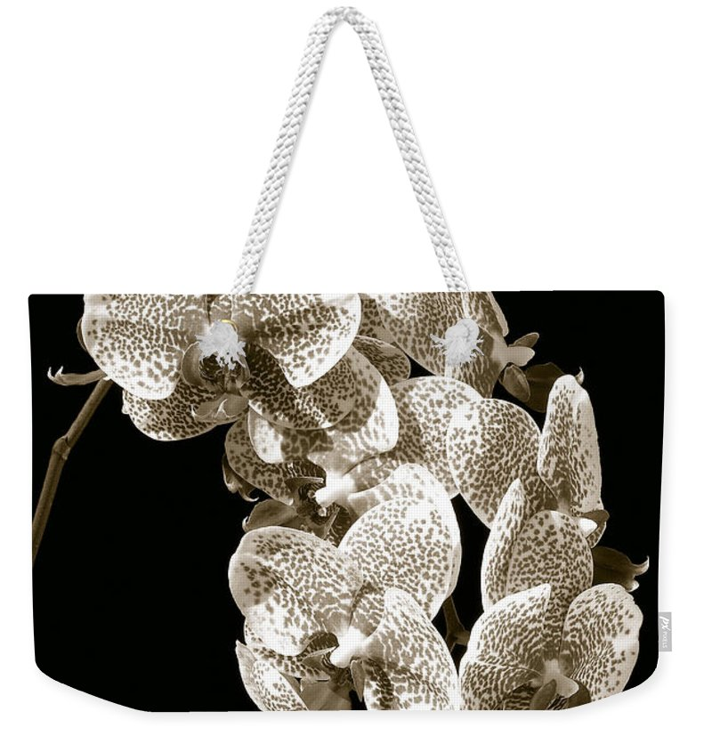 Phalaenopsis Weekender Tote Bag featuring the photograph Phalaenopsis by Steven Sparks