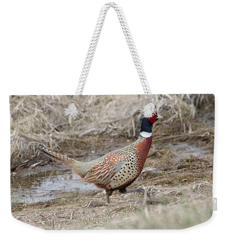 Rooster Weekender Tote Bag featuring the photograph Pheasant by Lori Tordsen