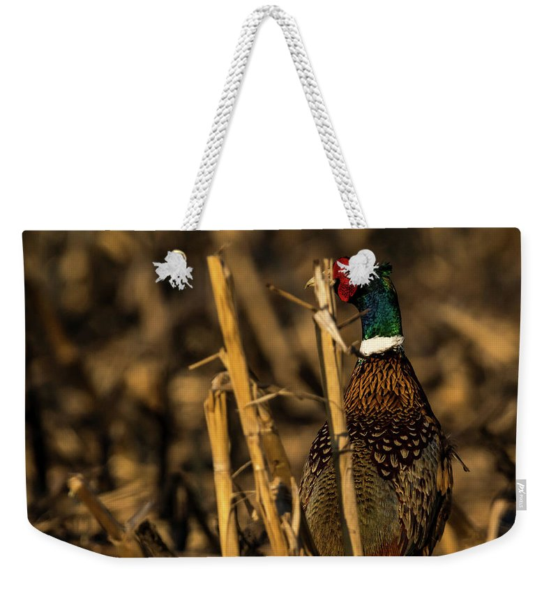 Ring-necked Pheasant Weekender Tote Bag featuring the photograph Pheasant Portrait by Travis Boyd
