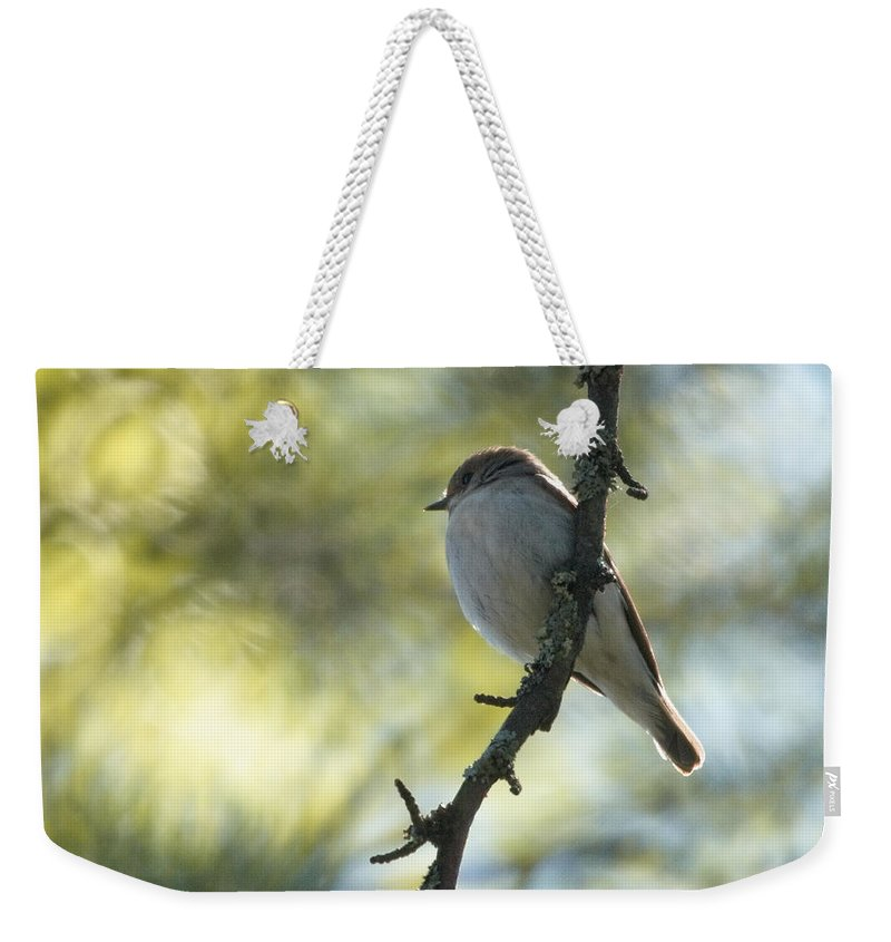 Lehtokukka Weekender Tote Bag featuring the photograph Pied Flycatcher 1 by Jouko Lehto