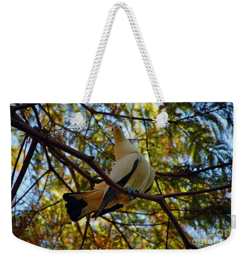 Pied Weekender Tote Bag featuring the photograph Pied Imperial Pigeon by Robert Meanor